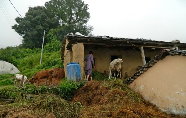 Home, cattle, farming household and essential biomass in a hill village, Himachal Pradesh. Photo: Rahul Goswami 2014